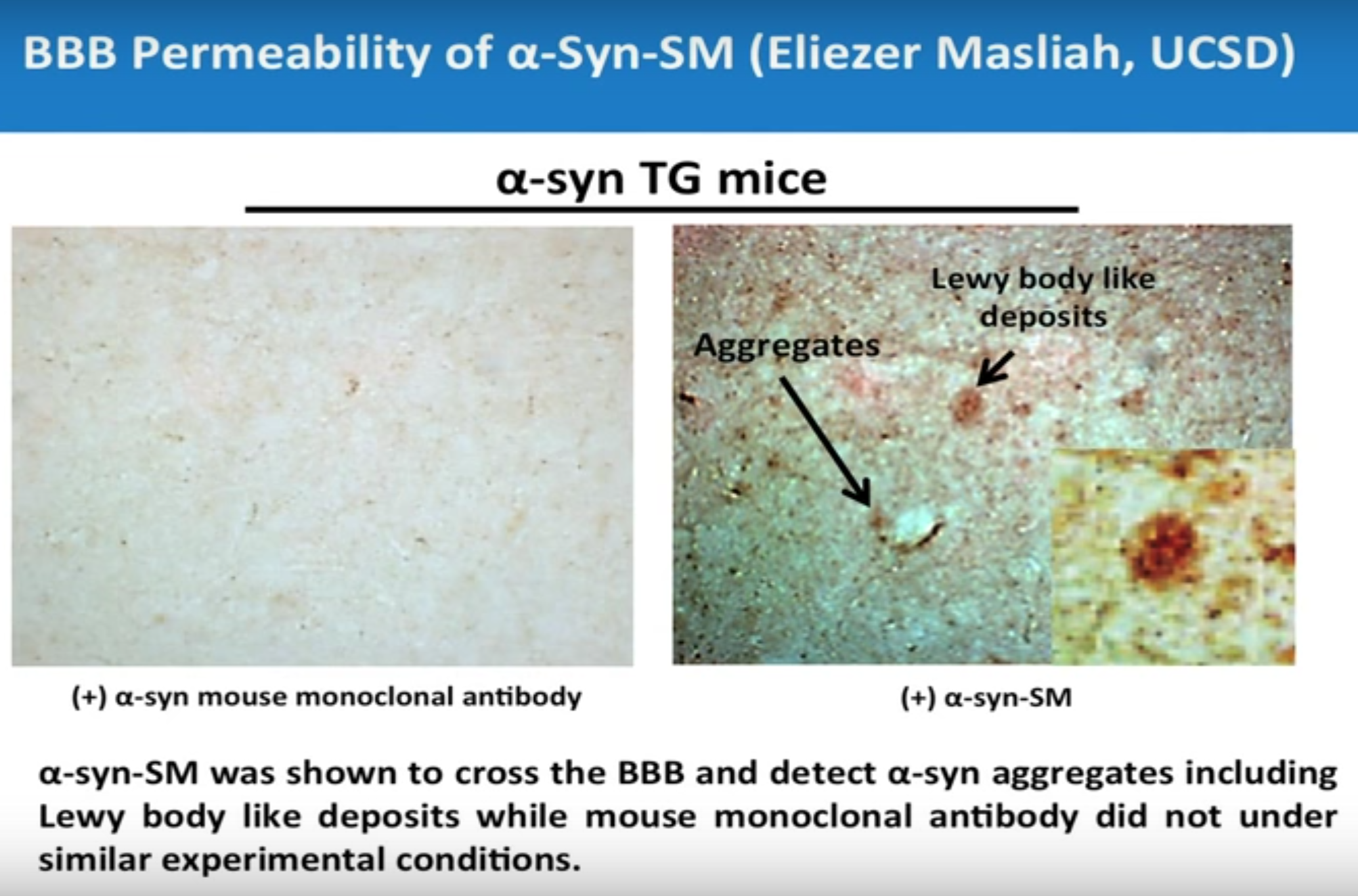 Third Party Validation of BBB Permeability and Target Specificity of SMs by Dr. Eliezer Masliah, UCSD